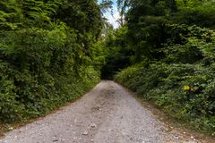 Strada non asfaltata nella campagna circondata dalle foreste Immagine Stock
