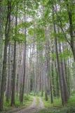 Strada non asfaltata nella foresta fotografia stock libera da diritti