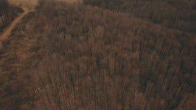 Strada non asfaltata nella foresta stock footage