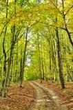 Strada non asfaltata nella foresta di autunno immagine stock libera da diritti