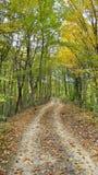 Strada non asfaltata nella foresta di autunno immagine stock