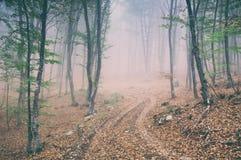 Strada non asfaltata nella magia e nella foresta nebbiosa del faggio di mattina fotografie stock
