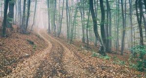 Strada non asfaltata nella magia e nella foresta nebbiosa del faggio di mattina immagini stock libere da diritti