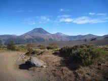 Strada non asfaltata polverosa in araucarias di las del parco nella Patagonia Immagine Stock