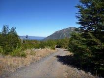 Strada non asfaltata polverosa in araucarias di las del parco nella Patagonia Fotografia Stock Libera da Diritti