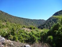 Strada non asfaltata polverosa in araucarias di las del parco nella Patagonia Fotografia Stock