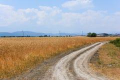 Strada non asfaltata rurale fra i giacimenti di grano Immagini Stock Libere da Diritti