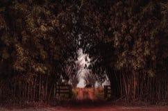 Strada non asfaltata su un giorno nero circondata dagli alberi di bambù Immagine Stock