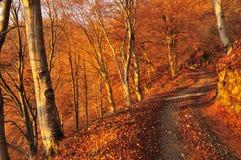 Strada non asfaltata in un legno di faggio di autunno all'alba Fotografie Stock Libere da Diritti