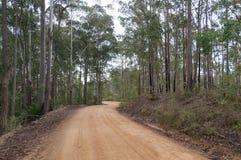 Strada non sigillata rurale, strada non asfaltata con l'albero di eucalyptus fotografia stock