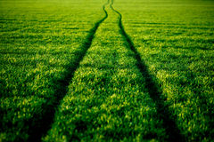 Strada ondulata sul greenfield, molla, estate Fotografie Stock Libere da Diritti