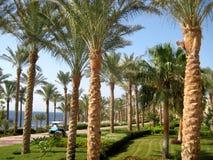 Strada, palme e fiori su una spiaggia del Mar Rosso Immagini Stock