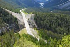 Strada panoramica di Icefield in foreste Fotografia Stock