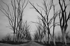 Strada in parco abbandonato Immagini Stock Libere da Diritti