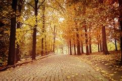 Strada pavimentata con le pietre per lastricati nel parco di autunno Fotografia Stock