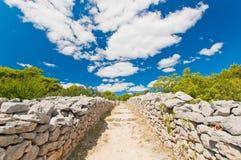 Strada pietrosa semplice in frutteto verde oliva in Croazia Fotografia Stock Libera da Diritti