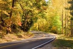 Strada principale attraverso la foresta Fotografie Stock