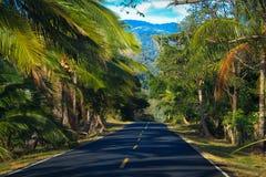 Strada principale attraverso una giungla verde fertile fotografia stock