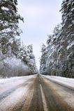 Strada principale con l'inverno della foresta, strada, inverno attillato della foresta, paesaggio freddo Precipitazioni nevose pe fotografia stock libera da diritti