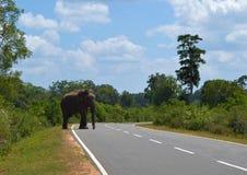 Strada principale dell'elefante Immagini Stock
