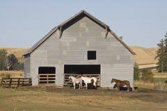 Strada principale rurale d'avvolgimento nel paese di Palouse in Washington State sudorientale Fotografia Stock Libera da Diritti