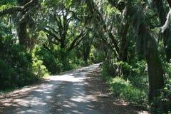 Strada privata allineata con gli alberi di Live Oak Immagine Stock