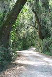 Strada privata allineata con gli alberi di Live Oak Immagini Stock Libere da Diritti