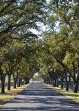 Strada privata con gli alberi Fotografia Stock