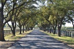 Strada privata con gli alberi da entrambi i lati Immagine Stock Libera da Diritti