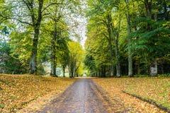 Strada privata lunga in autunno Immagini Stock