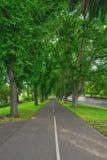 Strada retrocedere con i vicoli dell'albero immagine stock libera da diritti