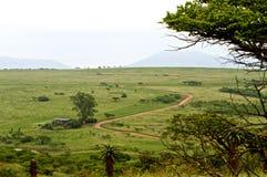 Strada rossa d'avvolgimento attraverso la savanna Fotografie Stock Libere da Diritti