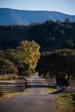 Strada rurale fotografie stock libere da diritti