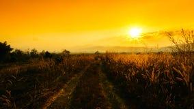 Strada rurale al tramonto sulle alte montagne Sole e luce dorati thr Immagini Stock