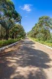 Strada rurale allineata dagli alberi immagini stock
