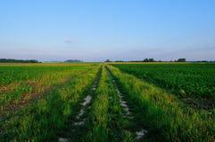 Strada rurale attraverso i campi Fotografie Stock Libere da Diritti