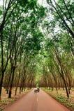 Strada rurale attraverso la piantagione fertile verde dell'albero della gomma in sou Immagini Stock Libere da Diritti