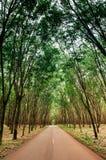 Strada rurale attraverso la piantagione fertile verde dell'albero della gomma in sou Fotografia Stock