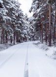 Strada rurale con l'abetaia nell'inverno fotografia stock