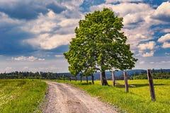 Strada rurale con l'albero Fotografie Stock Libere da Diritti