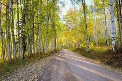 Strada rurale con la tremula gialla e verde alta durante la stagione di fogliame Immagine Stock