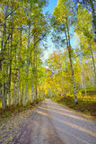 Strada rurale con la tremula gialla e verde alta durante la stagione di fogliame Immagini Stock