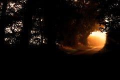 Strada rurale con luce solare di alba che splende attraverso l'estremità di un tunnel denso degli alberi fotografie stock