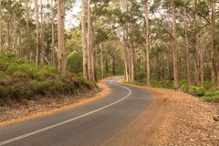 Strada rurale d'avvolgimento in Karri Forest Fotografia Stock