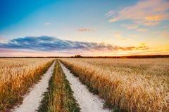 Strada rurale della campagna attraverso il paesaggio del giacimento di grano Antivari giallo Immagini Stock