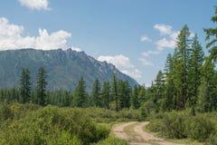 Strada rurale della foresta che conduce al paesaggio di estate delle montagne Immagine Stock