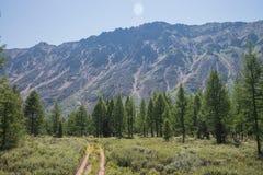 Strada rurale della foresta che conduce al paesaggio di estate delle montagne Fotografia Stock Libera da Diritti