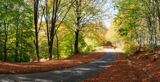 Strada rurale di autunno Fotografie Stock