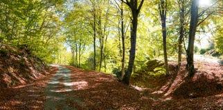 Strada rurale di autunno Fotografia Stock