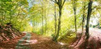 Strada rurale di autunno con i raggi del sole Fotografia Stock